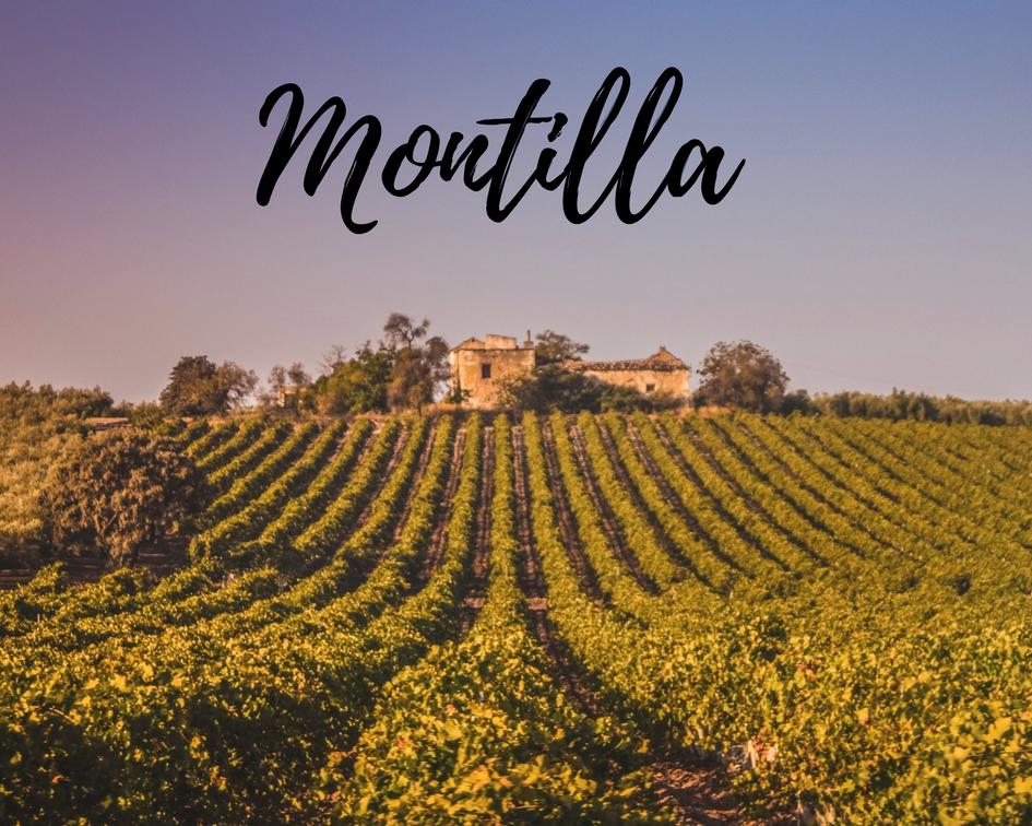 Enoturismo en Montilla, un paseo por sus viñedos - Los viajes de Margalliver